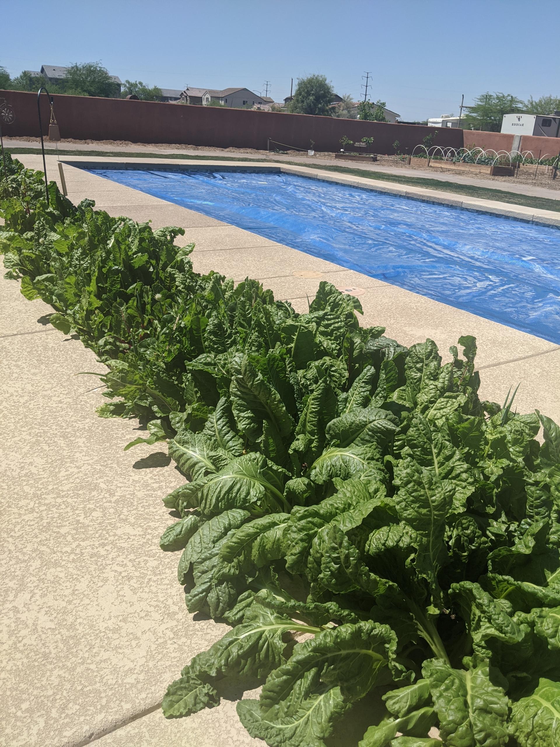 Landscaping Using Edible Plants | TigerMountain Foundation